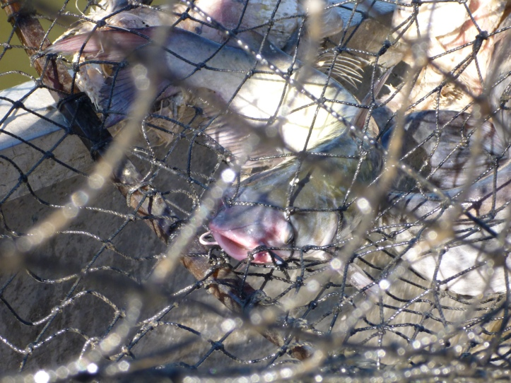 LDWF to Extend Registration for 2019 Shrimp Bycatch Study